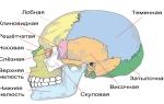 Перелом черепа у грудничка: симптомы, первая помощь и лечение