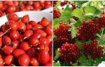 Брусника при подагре: польза ягоды при заболевании