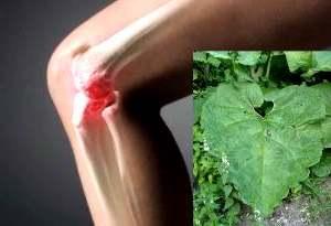 Правила лечения суставов с помощью солидола