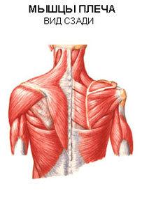 Методика массажа при плечелопаточном периартрите