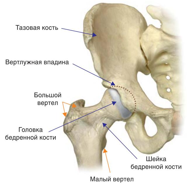Реабилитация после перелома шейки бедра — основные меры