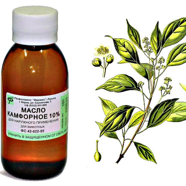 Пихтовое масло для эффективного лечения суставов