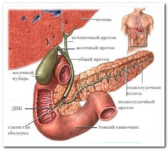 Спазмы под ребрами: причины, лечение и локализация