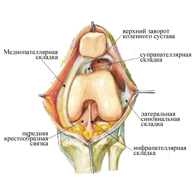 трудности картинки складок колена эта