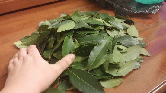 Лечение заболеваний суставов при помощи лавровых листьев