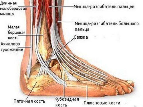 Растяжение лодыжки: первая помощь, лечение, симптомы