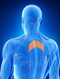 Спазмы в грудной клетке — симптомы и лечение