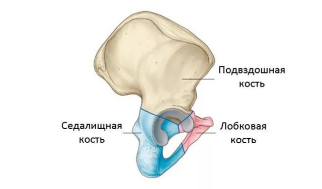 Перелом подвздошной кости: симптомы, первая помощь и лечение