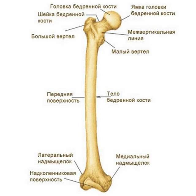 Перелом малой берцовой кости: виды, симптомы и лечение