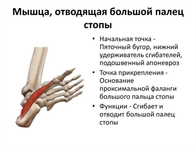 Халюс вальгус: операция косточки на ногах, цена – Москва
