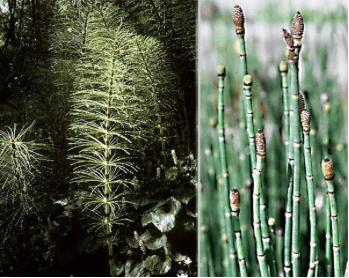 Применяем 9 видов трав для лечения шейного остеохондроза