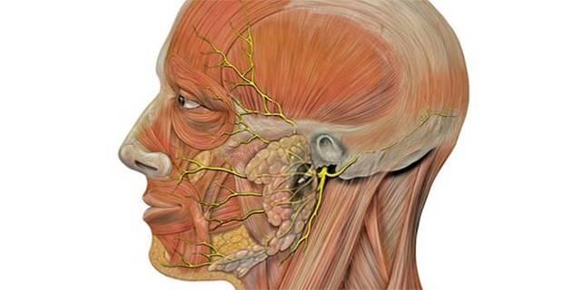 Защемление лицевого нерва: причины, лечение, симптомы