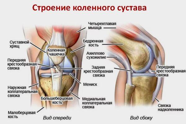 УЗИ коленного сустава: что показывает и как проводят