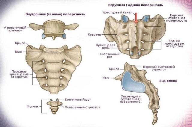 Боль в копчике при сидении: причины и лечение