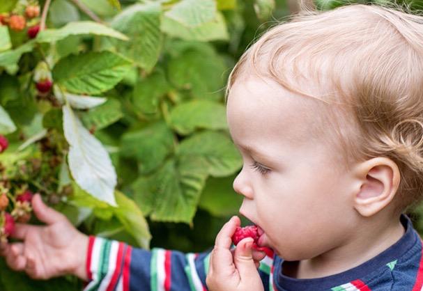 Употребление малины при подагре: польза или вред