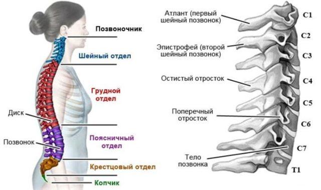 Миелопатия грудного отдела позвоночника: лечение, симптомы, виды