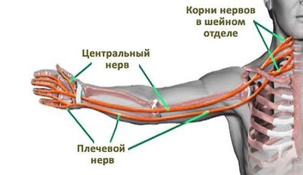 Невралгия плечевого нерва — причины, лечение, симптомы