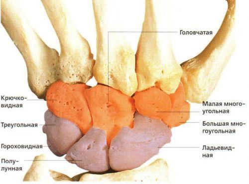Болезнь Кинбека - характерные симптомы и лечение