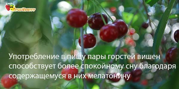 Вишня при подагре: влияние ягоды на здоровье