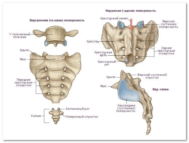 Деформирующий спондилез поясничного отдела позвоночника: причины, симптомы и лечение