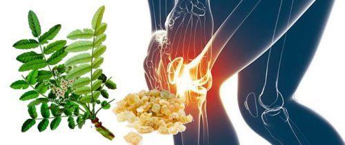 Босвеллия для лечения суставов: применение и отзывы